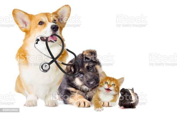 Kitten and puppy picture id639503932?b=1&k=6&m=639503932&s=612x612&h=neuxknnlffogcymjttdsenzzwliglsgtuhwqdb3 gwa=