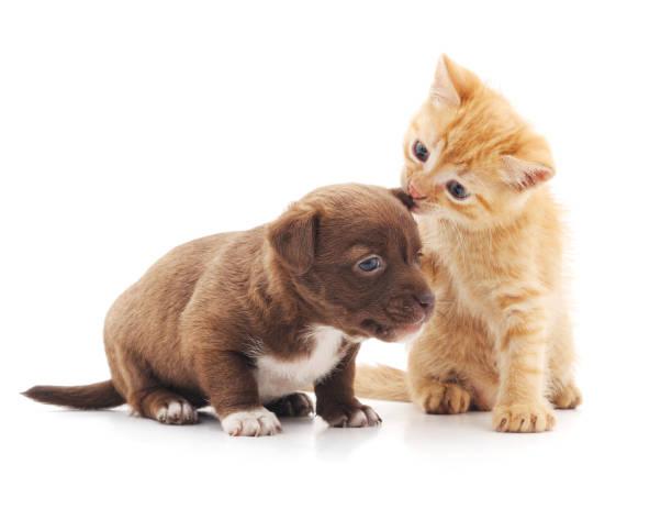 Kitten and puppy picture id641899114?b=1&k=6&m=641899114&s=612x612&w=0&h=frlm65idysbfwxb3xes1ey7ldvkcsvbjuvqtiztu4wk=