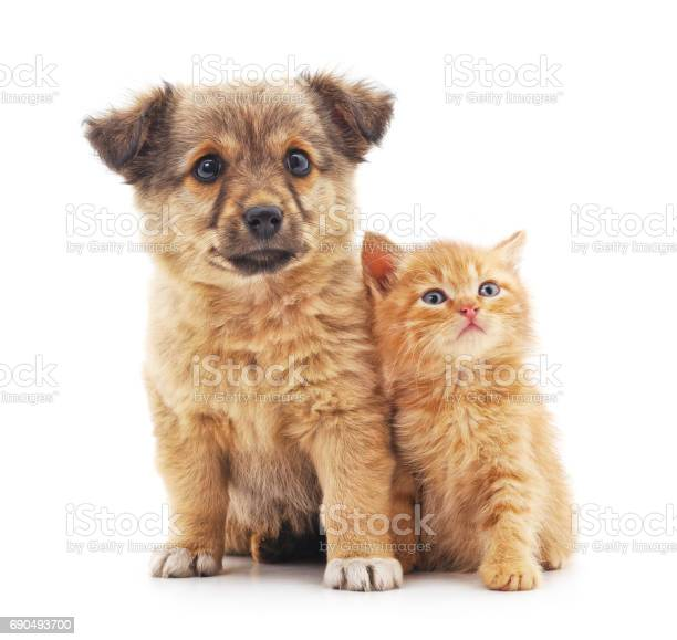 Kitten and puppy picture id690493700?b=1&k=6&m=690493700&s=612x612&h=pvkr694 lzomlnve27m8zgv1vznjnmyjhhhjc3kskna=