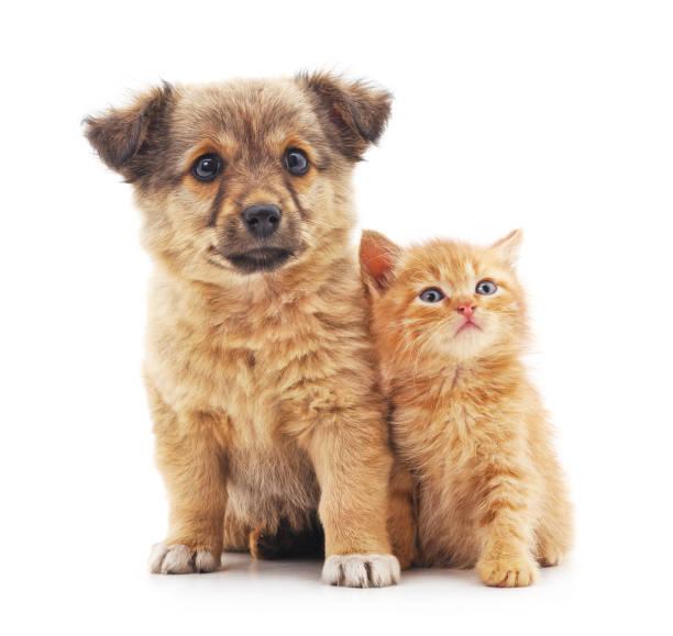 Kitten and puppy picture id690493700?b=1&k=6&m=690493700&s=612x612&w=0&h=6xu4s7kpbucc9kmoleramls8dzkoc8p91m1p7vhxuzy=