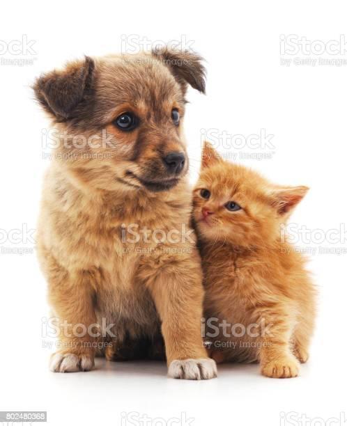 Kitten and puppy picture id802480368?b=1&k=6&m=802480368&s=612x612&h=f5hb26tu6bsh9ajmo cr0b0m3tam6cyuoeyxewmuqiq=
