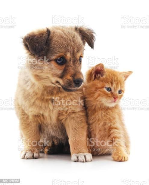Kitten and puppy picture id850128986?b=1&k=6&m=850128986&s=612x612&h=lqnrnwsy0mj2jlsrnmfesqgj 0s3wtnclv5cbppovkq=