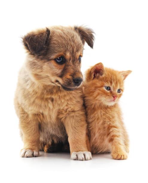 Kitten and puppy picture id850128986?b=1&k=6&m=850128986&s=612x612&w=0&h=oodd4xdo20qag3wbe4zuecph0bkhmg l hz8dtzhr i=