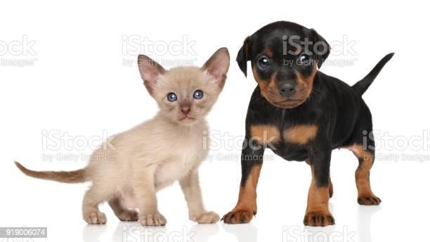 Kitten and puppy picture id919006074?b=1&k=6&m=919006074&s=612x612&h=q67teeow qn8zsjbixsakdzidkzzp3c lkastzclwlo=