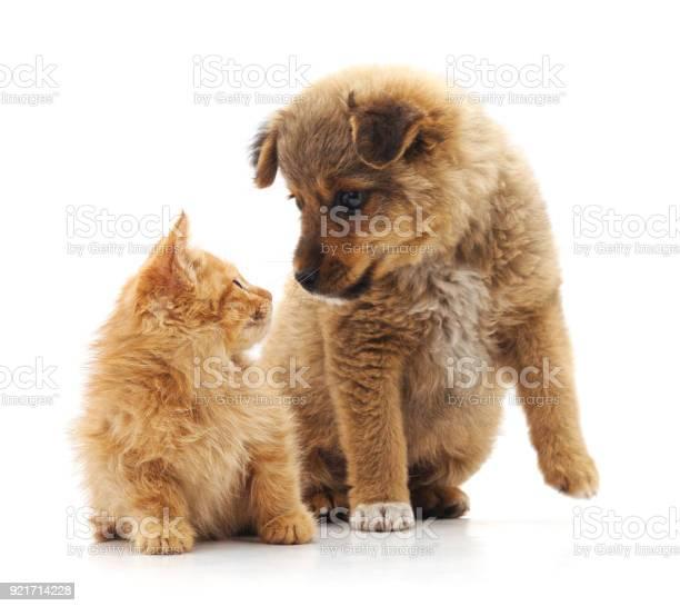 Kitten and puppy picture id921714228?b=1&k=6&m=921714228&s=612x612&h=ytadr bbd7u2i28kf0qgjekcennzxnldhzj4cgovwku=