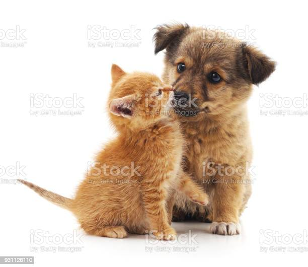 Kitten and puppy picture id931126110?b=1&k=6&m=931126110&s=612x612&h=x0chkiw4a8vdwt2tnzd uhwlt8nm trbfxb0xzubwqc=