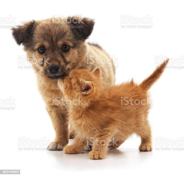 Kitten and puppy picture id953435652?b=1&k=6&m=953435652&s=612x612&h=sxrihprayx5t3vgex92rl5gipdtnrefaeyun3in3kmu=