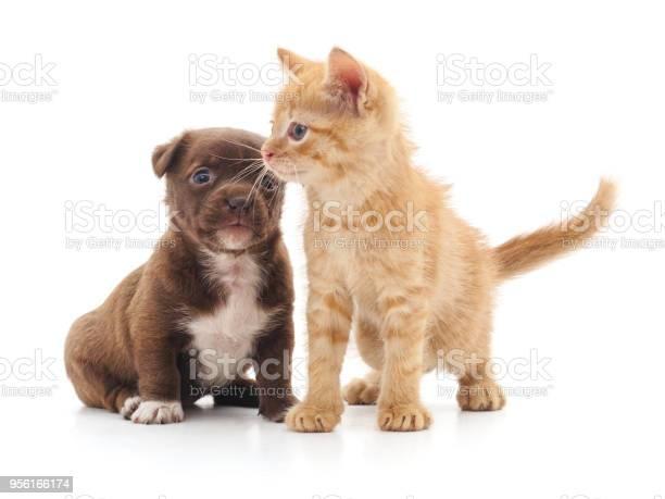 Kitten and puppy picture id956166174?b=1&k=6&m=956166174&s=612x612&h=zmkksk y2aki4zvekwlll3gg4rer1qr 0a0g5h4x3io=