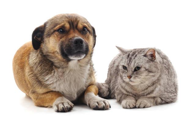 Kitten and puppy picture id969574788?b=1&k=6&m=969574788&s=612x612&w=0&h=d3wcpsji9vh2uebv8wazy8l fuvlp8jx53trg7gym0i=