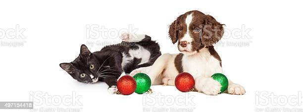 Kitten and puppy playing with christmas bulbs banner picture id497154418?b=1&k=6&m=497154418&s=612x612&h=c4extgdgx 3yps yvovudkyt638seoh1yo5kd7qip 8=