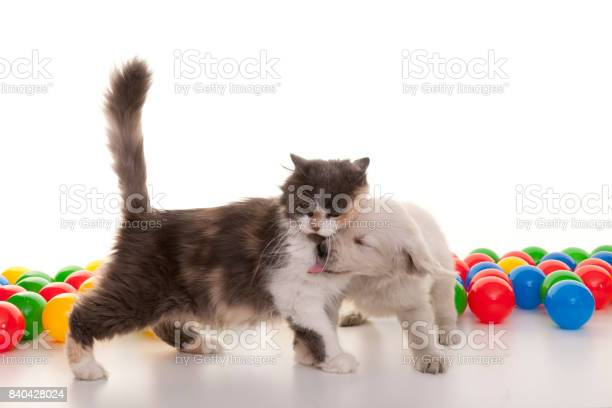 Kitten and puppy playing with colorful balls picture id840428024?b=1&k=6&m=840428024&s=612x612&h=crdvyh14bgcehd1jklrx45wsntwylec2uxg7opccrp8=