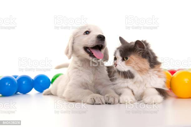 Kitten and puppy playing with colorful balls picture id840428026?b=1&k=6&m=840428026&s=612x612&h=2aloltrokzrzkmiobutinlco9f9zjwlkqo 35nthht0=