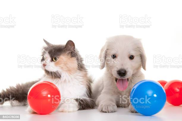 Kitten and puppy playing with colorful balls picture id840428036?b=1&k=6&m=840428036&s=612x612&h=lrdne8ht zolzjoeelbtkfl5yxlrr bky65aid43wuu=