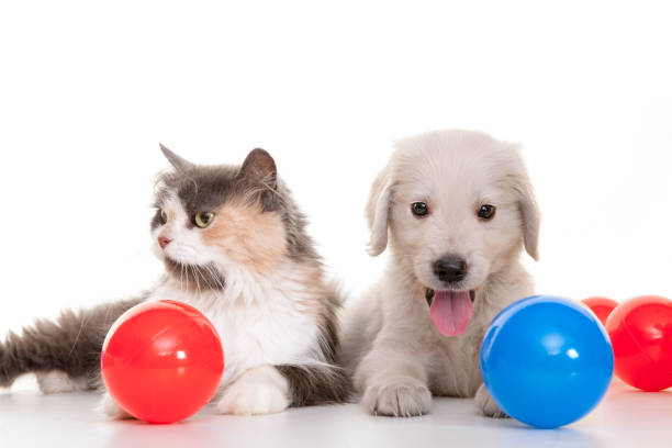 Kitten and puppy playing with colorful balls picture id840428036?b=1&k=6&m=840428036&s=612x612&w=0&h=lovbutd8osm7x jfqv k58ejvp9kua15z ckqpwua1i=