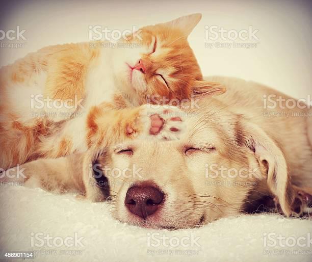 Kitten and puppy sleeping picture id486901154?b=1&k=6&m=486901154&s=612x612&h=nn5l3gciej kqyyja6vbwptbf6uvmd1ydonyupbmr6k=