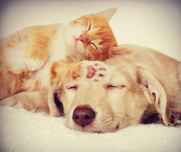 Kätzchen und Welpen Schlafen – Foto