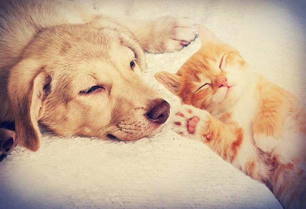 Kitten and puppy sleeping picture id486902978?b=1&k=6&m=486902978&s=612x612&w=0&h=k2ddewjn z7h3cgojvkfjslgo hisvome2pww3ueoyo=