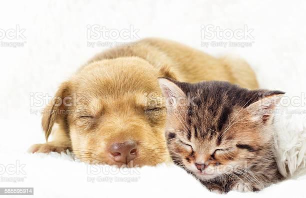 Kitten and puppy sleeping picture id585595914?b=1&k=6&m=585595914&s=612x612&h=bzu8cl61okwkp1czpopdbd9buxuxrjq8lrphvji42gc=