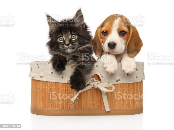 Kitten and puppy together in basket picture id1059778214?b=1&k=6&m=1059778214&s=612x612&h=5n3nbilrmbatjfdv3vyy71ys1ykc0raedg4dovsg5v8=