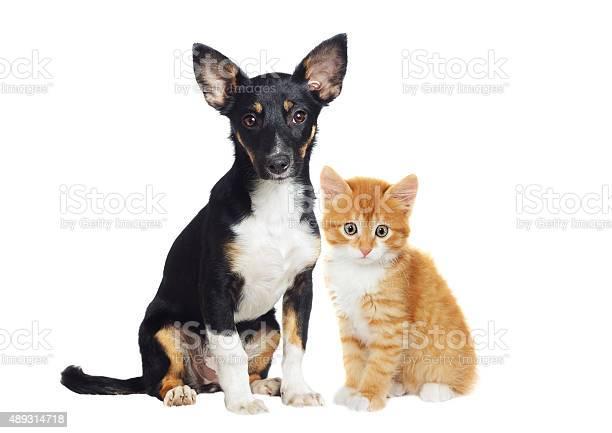 Kitten and puppy watching picture id489314718?b=1&k=6&m=489314718&s=612x612&h=dipg65cat1joff eaeinl1sstcn3poaq rgq6wdulze=