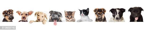 Kitten and puppy watching picture id513933740?b=1&k=6&m=513933740&s=612x612&h=ys3d8strds2qe3d2xwjm9msggawmfxnnrdcyxjekhf0=
