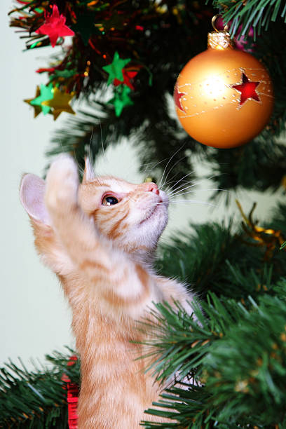Kitten and the christmas tree picture id96775788?b=1&k=6&m=96775788&s=612x612&w=0&h=siwhboi7o1zmw40qii8yosbdpju2xlwlshycsukzg3y=