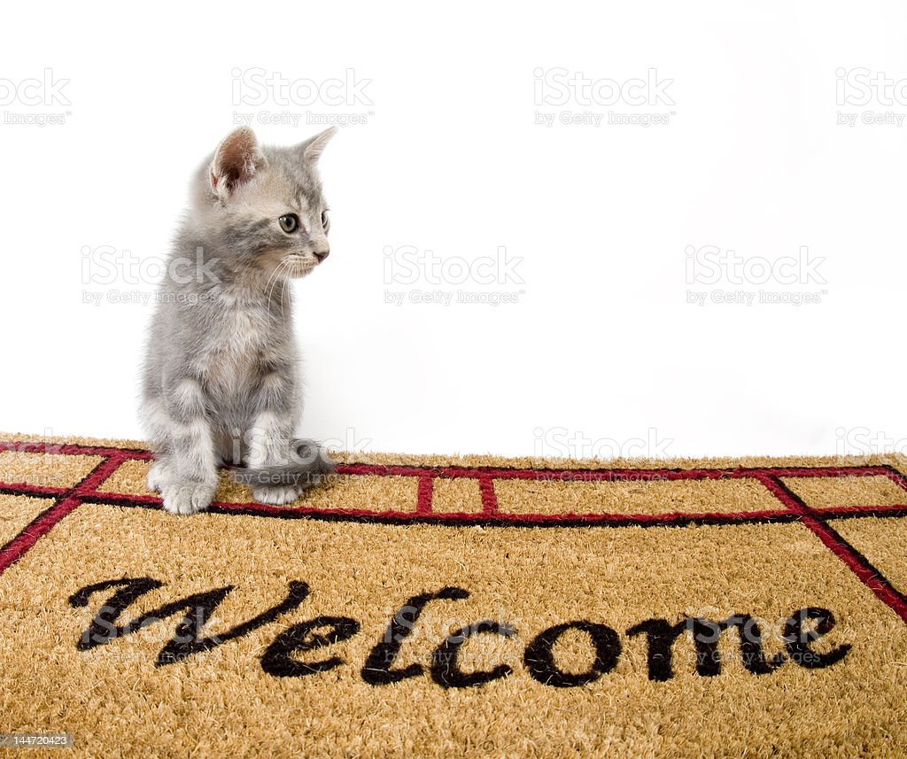 Kitten and welcome mat stock photo