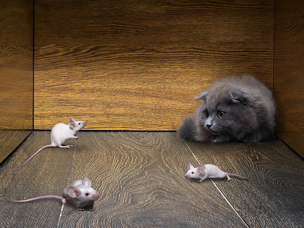 kitten and white mice in the closet - katzenschrank stock-fotos und bilder