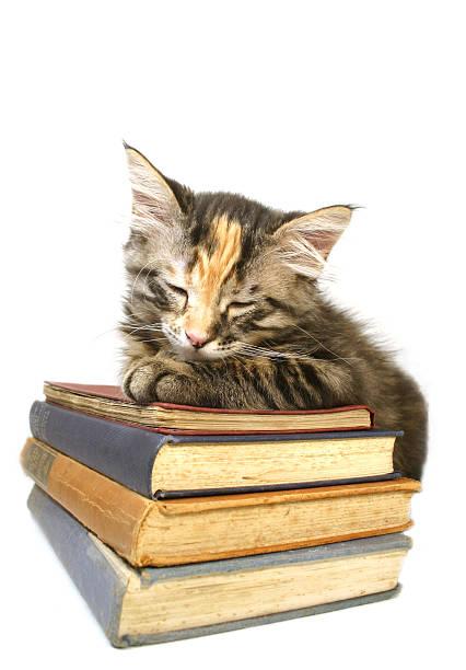 Kitten asleep on old books picture id92513979?b=1&k=6&m=92513979&s=612x612&w=0&h=x0hjyku1dxtacfklue7bgem4t f6yy6ukw4adqwvlim=