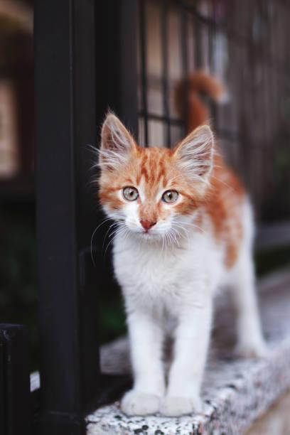 Kätzchen zu Hause Gartenwand – Foto
