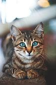 istock Kitten at home garden wall 1273661469