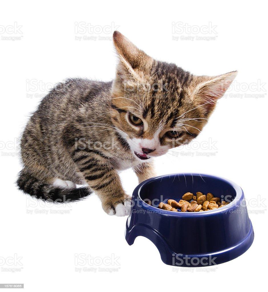 kitten at mealtimes stock photo