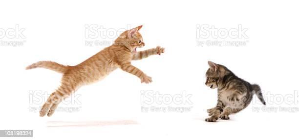 Kitten attack picture id108198324?b=1&k=6&m=108198324&s=612x612&h= j4rm6f4oedlz7yqs 3yrjvppri4uw2 5muizbgc iq=
