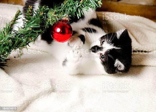 Kitten batting an ornament picture id184924513?b=1&k=6&m=184924513&s=612x612&h=3agrim mru6jodryr1wv5zravdms78zdbljzoqs 2xo=