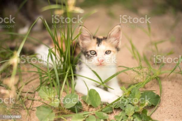 Kitten cat portrait picture id1223707462?b=1&k=6&m=1223707462&s=612x612&h=iah1r0drfqa3nliwasdhv6euuxyjylnt4cgq0pl60km=