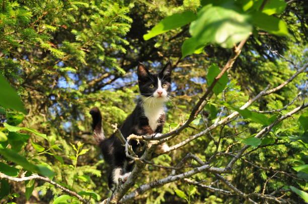 Kitten climbing tree picture id692761764?b=1&k=6&m=692761764&s=612x612&w=0&h=jjm5yd6caig9gwucrjmuvqfd 3zwwhy52wqrydgpvby=