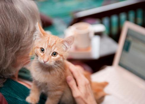 istock Kitten Companion 157403527