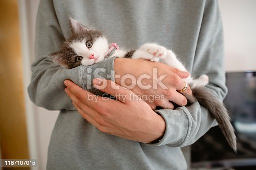 Unrecognisable man holding a kitten in his arms. The kitten is looking at the camera.