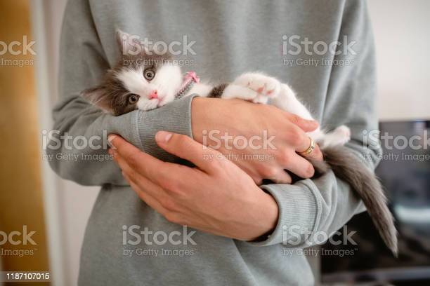 Kitten cuddles picture id1187107015?b=1&k=6&m=1187107015&s=612x612&h=et2owns9ccbv7afcvly5mxt0od9ci4rf0xe q1vbfoy=
