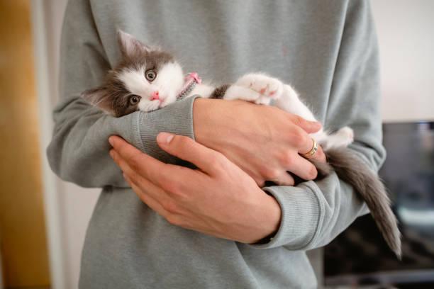Kitten cuddles picture id1187107015?b=1&k=6&m=1187107015&s=612x612&w=0&h=1sh5sm4uqdqqs3xshepvjonxsvbjhbxwgp8nbaj3p9a=