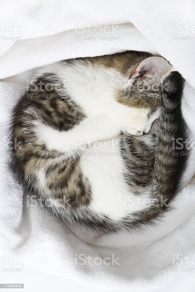 Kitten curled up asleep royalty-free stock photo
