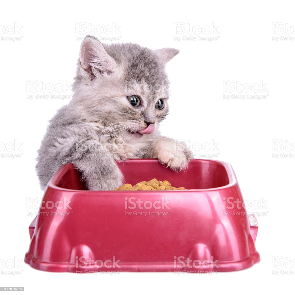 kitten eat diet food stock photo