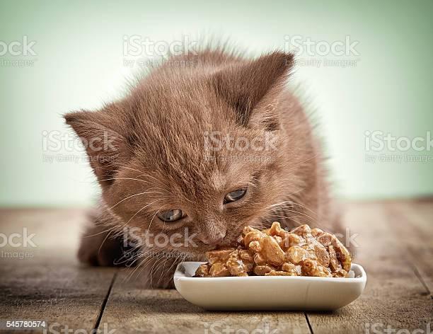 Kitten eating cats food picture id545780574?b=1&k=6&m=545780574&s=612x612&h=nwkc4nu5bf3d lk1ckd xlsktnoonymgoru8lcbrdya=