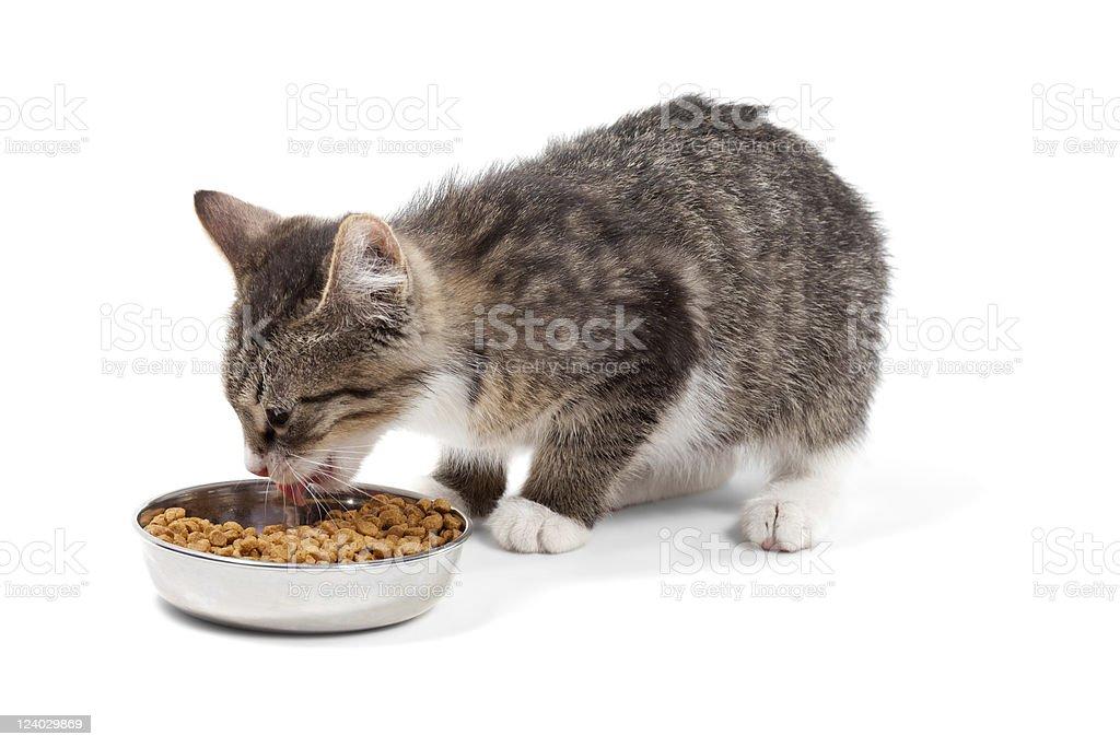 Kitten eats a dry feed royalty-free stock photo