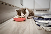 Close up of a kitten eating out of a food bowl while at home.