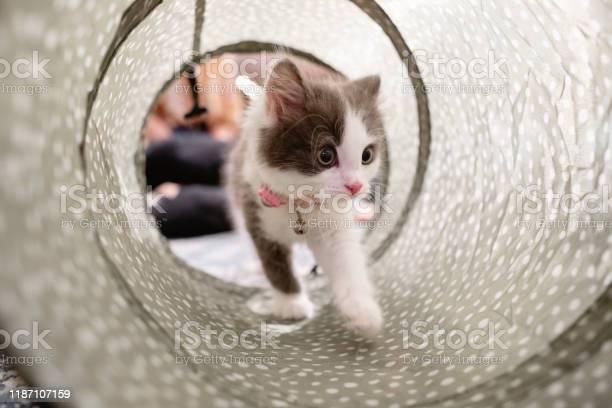 Kitten exploring her surroundings picture id1187107159?b=1&k=6&m=1187107159&s=612x612&h=f0vth8atshts332svll52ssmr9ny6lwqq7 fahyfjri=