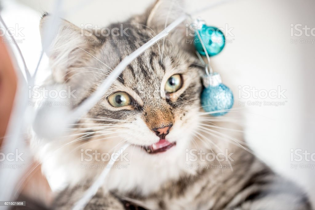 Kitten getting into the Christmas Spirit photo libre de droits