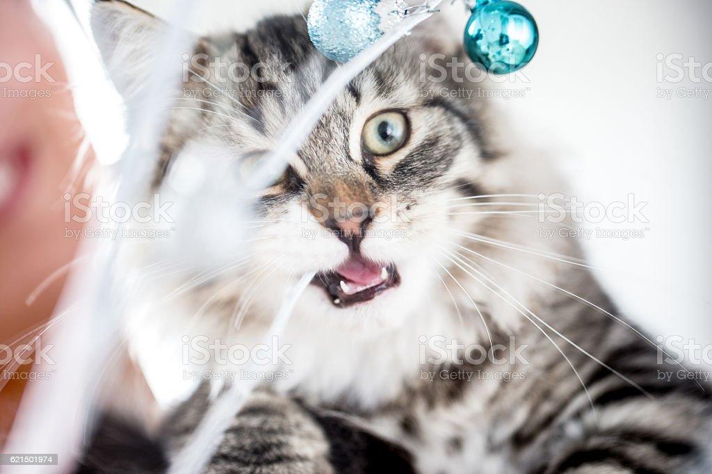 Kitten getting into the Christmas Spirit Lizenzfreies stock-foto