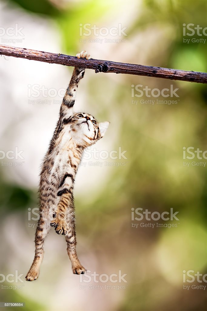 Kitten Hanging From Tree Branch stock photo