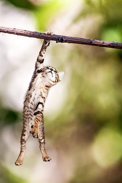 kitten hanging from tree branch - dal bitki bölümü stok fotoğraflar ve resimler
